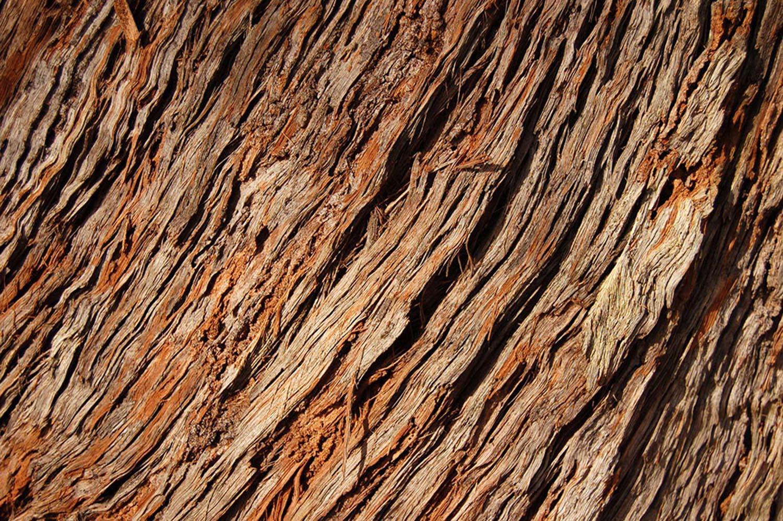 árvores lp 076-2