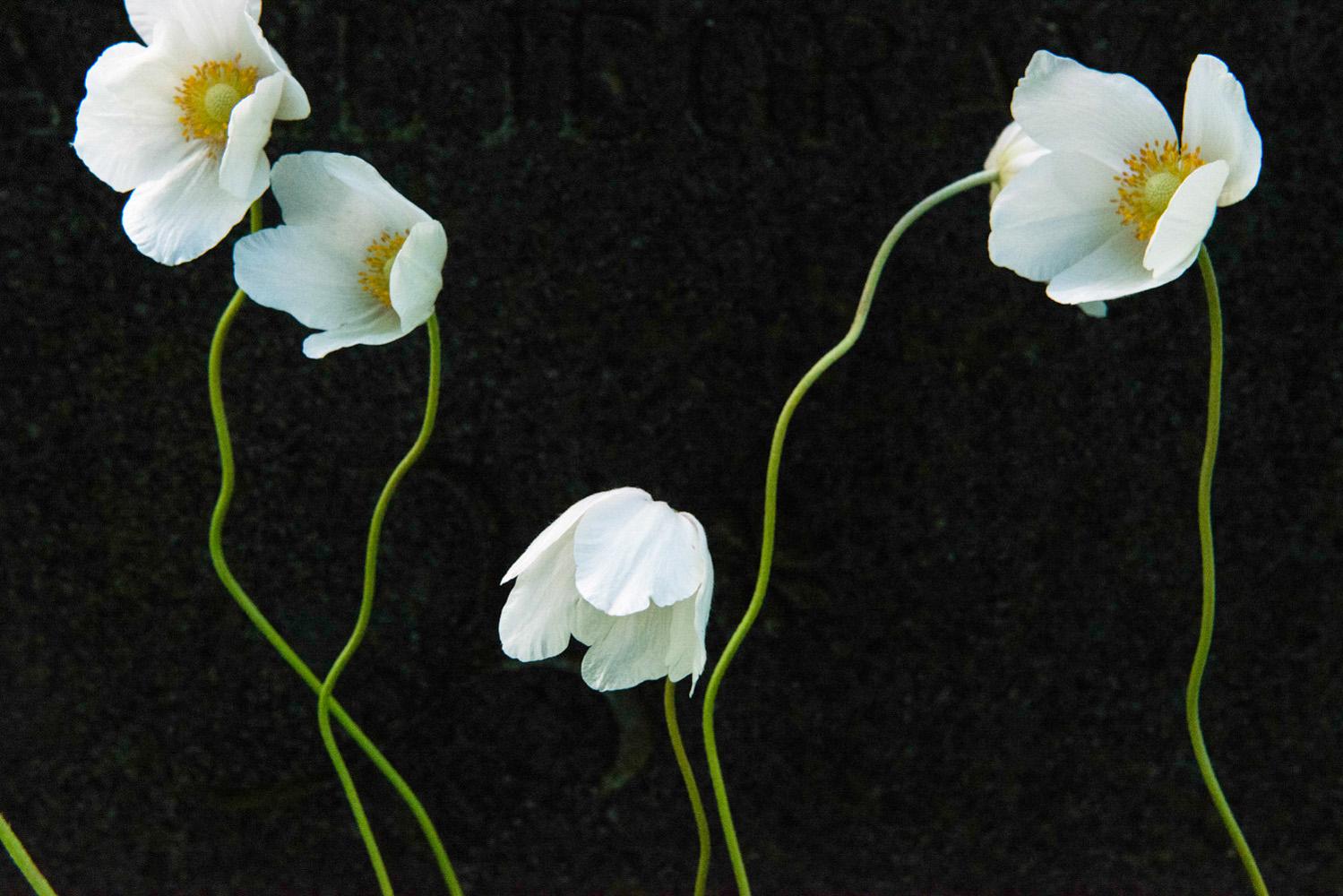 8 - Flores-2